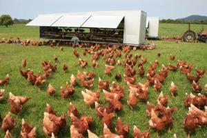 Pastured-free-range-egg-farming